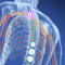 NSW Spinal Cord Injury Research Grants now open for applications